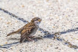 Sparrow With A Broken Wing